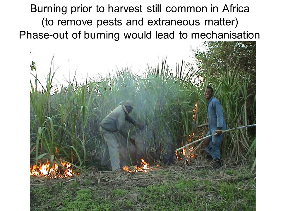 Burning prior to harvest still common in Africa (to remove pests and extraneous matter) Phase-out of burning would lead to mechanisation