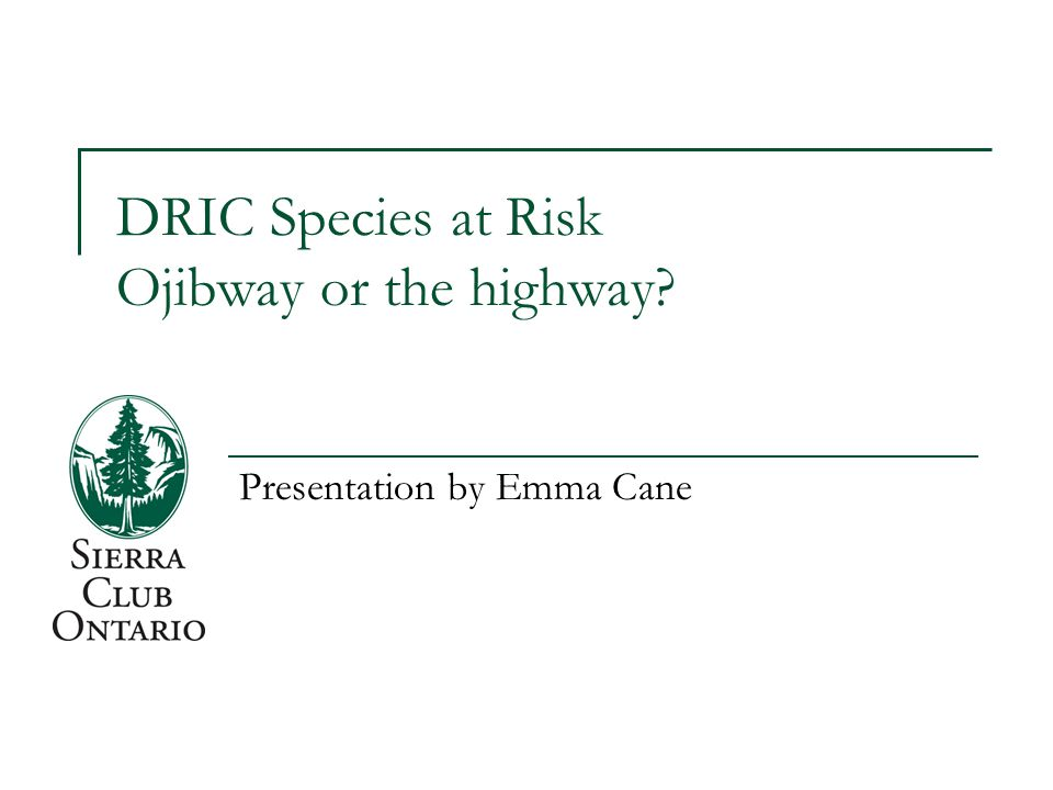 DRIC Species at Risk Ojibway or the highway? Presentation by Emma Cane
