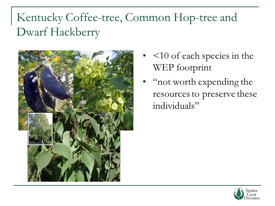 Kentucky Coffee-tree, Common Hop-tree and Dwarf Hackberry <10 of each species in the WEP footprint not worth expending the resources to preserve these individuals