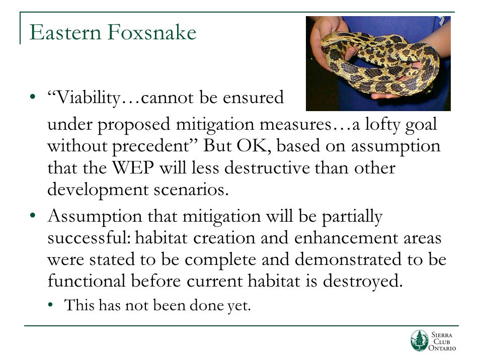 Eastern Foxsnake Viability…cannot be ensured under proposed mitigation measures…a lofty goal without precedent But OK, based on assumption that the WEP will less destructive than other development scenarios.