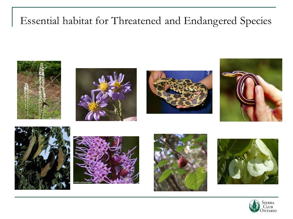 Essential habitat for Threatened and Endangered Species