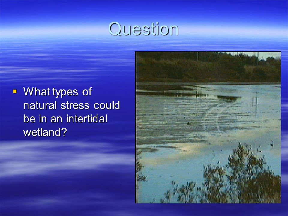 Question  What types of natural stress could be in an intertidal wetland?