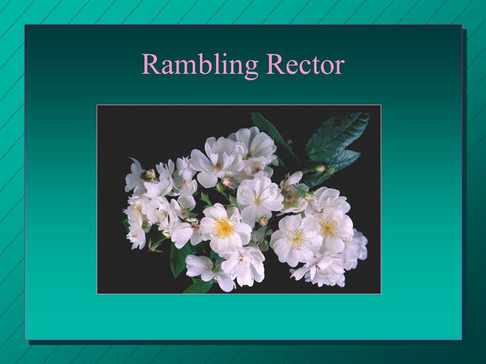 Rambling Rector