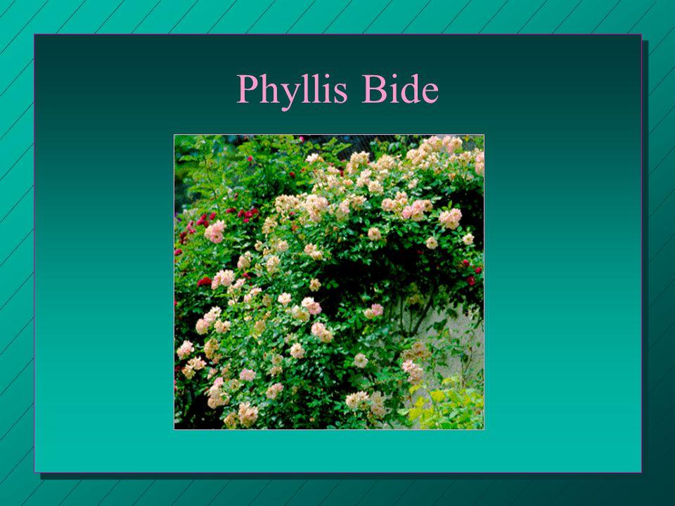 Phyllis Bide