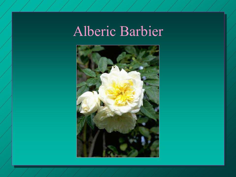 Alberic Barbier