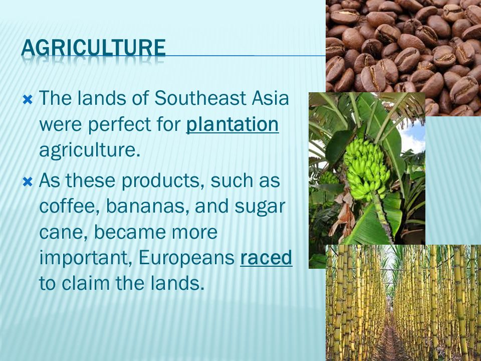  The lands of Southeast Asia were perfect for plantation agriculture.