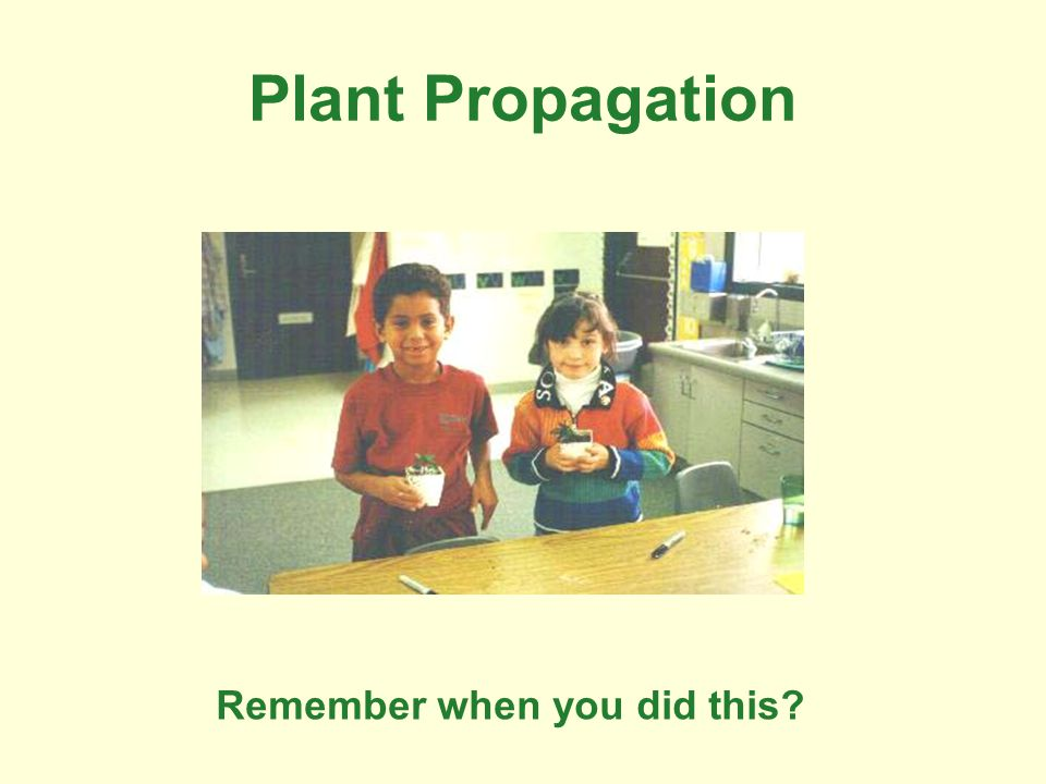 Plant Propagation Remember when you did this?