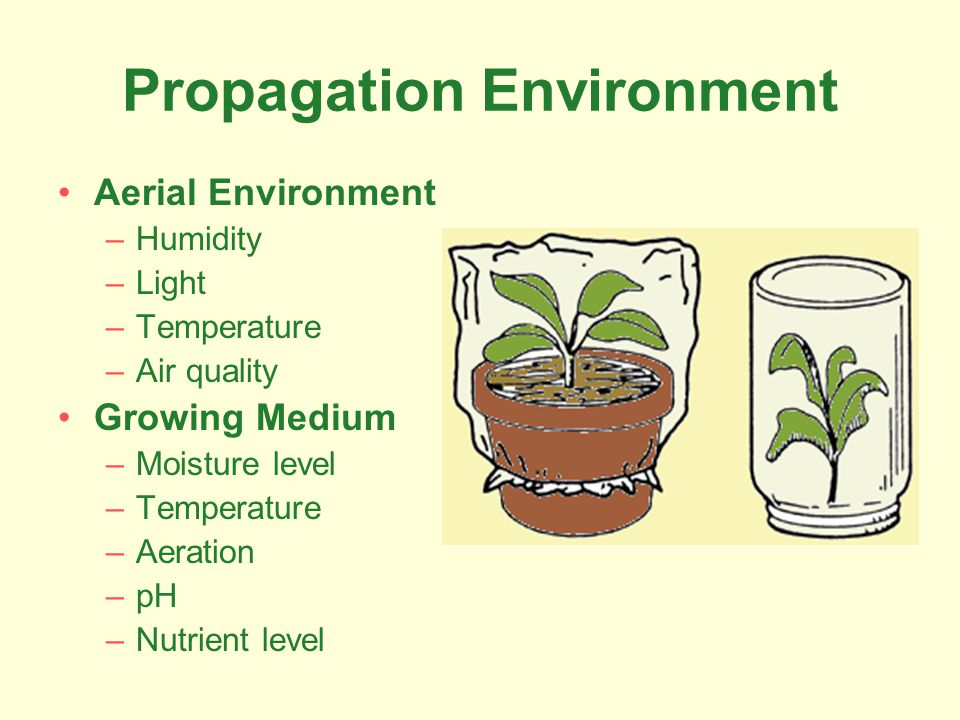 Propagation Environment Aerial Environment –Humidity –Light –Temperature –Air quality Growing Medium –Moisture level –Temperature –Aeration –pH –Nutri
