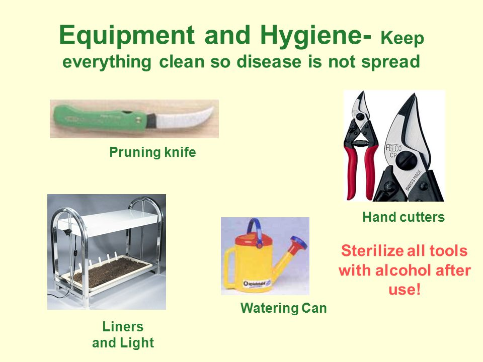 Equipment and Hygiene- Keep everything clean so disease is not spread Pruning knife Hand cutters Watering Can Liners and Light Sterilize all tools with alcohol after use!
