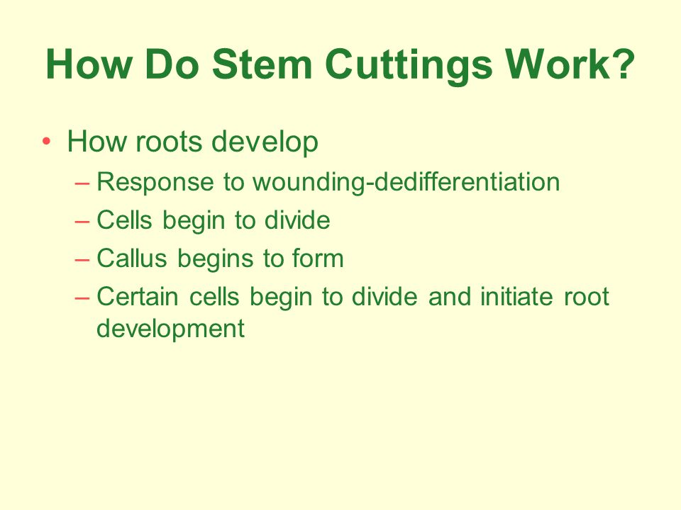 How Do Stem Cuttings Work.