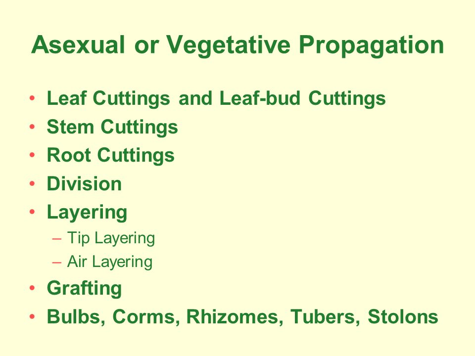 Asexual or Vegetative Propagation Leaf Cuttings and Leaf-bud Cuttings Stem Cuttings Root Cuttings Division Layering –Tip Layering –Air Layering Grafting Bulbs, Corms, Rhizomes, Tubers, Stolons