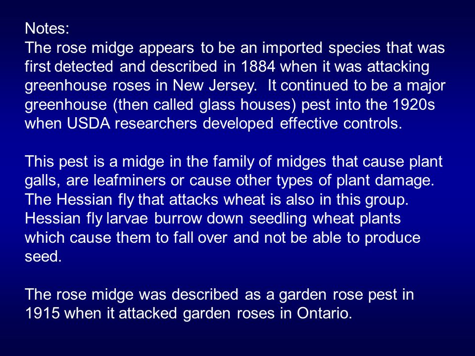 Notes: The rose midge appears to be an imported species that was first detected and described in 1884 when it was attacking greenhouse roses in New Je