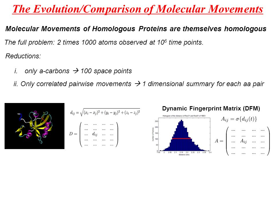 The Evolution/Comparison of Molecular Movements Molecular Movements of Homologous Proteins are themselves homologous The full problem: 2 times 1000 atoms observed at 10 6 time points.