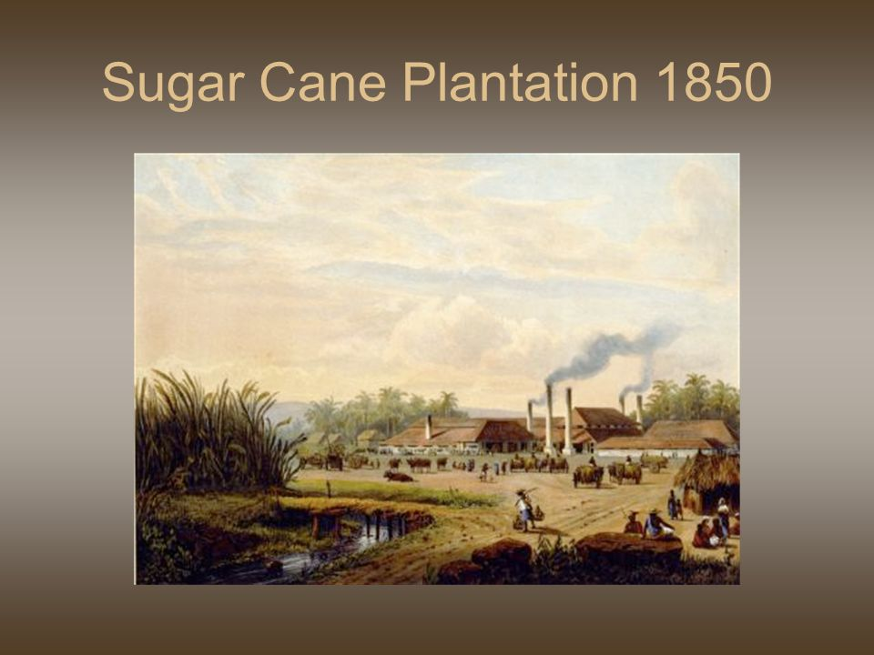 Sugar Cane Plantation 1850
