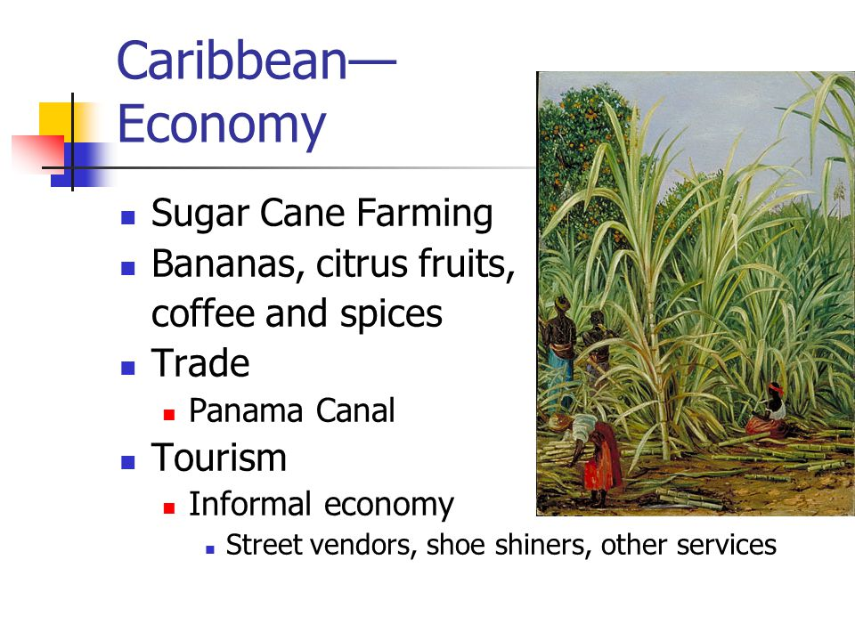 Caribbean— Economy Sugar Cane Farming Bananas, citrus fruits, coffee and spices Trade Panama Canal Tourism Informal economy Street vendors, shoe shiners, other services