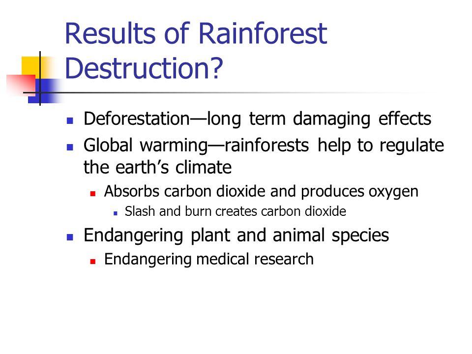 Results of Rainforest Destruction.