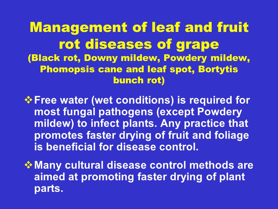 Management of leaf and fruit rot diseases of grape (Black rot, Downy mildew, Powdery mildew, Phomopsis cane and leaf spot, Bortytis bunch rot)  Free