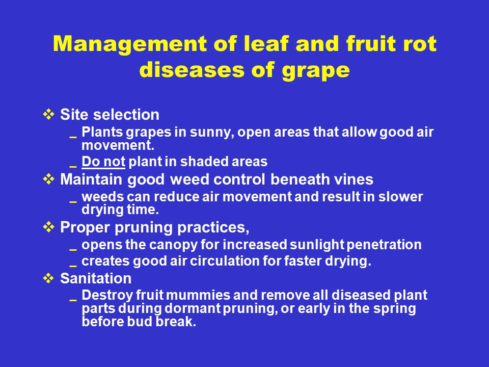 Management of leaf and fruit rot diseases of grape  Site selection  Plants grapes in sunny, open areas that allow good air movement.  Do not plant