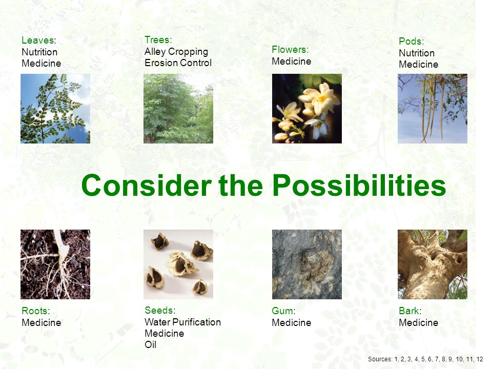 Nutrition Disease Prevention Ointment Alley Cropping Fertilizer Erosion Control Water Purification Cosmetics Textile Printing Insecticide Fungicide Lu