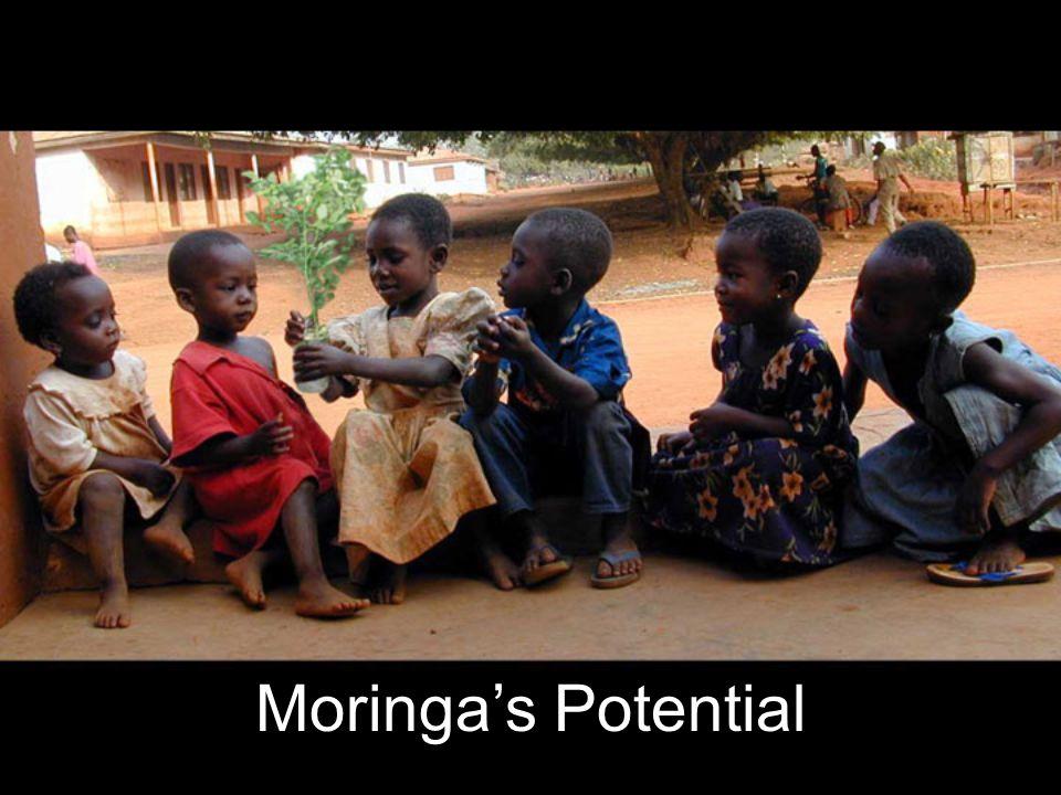 Moringa's Potential