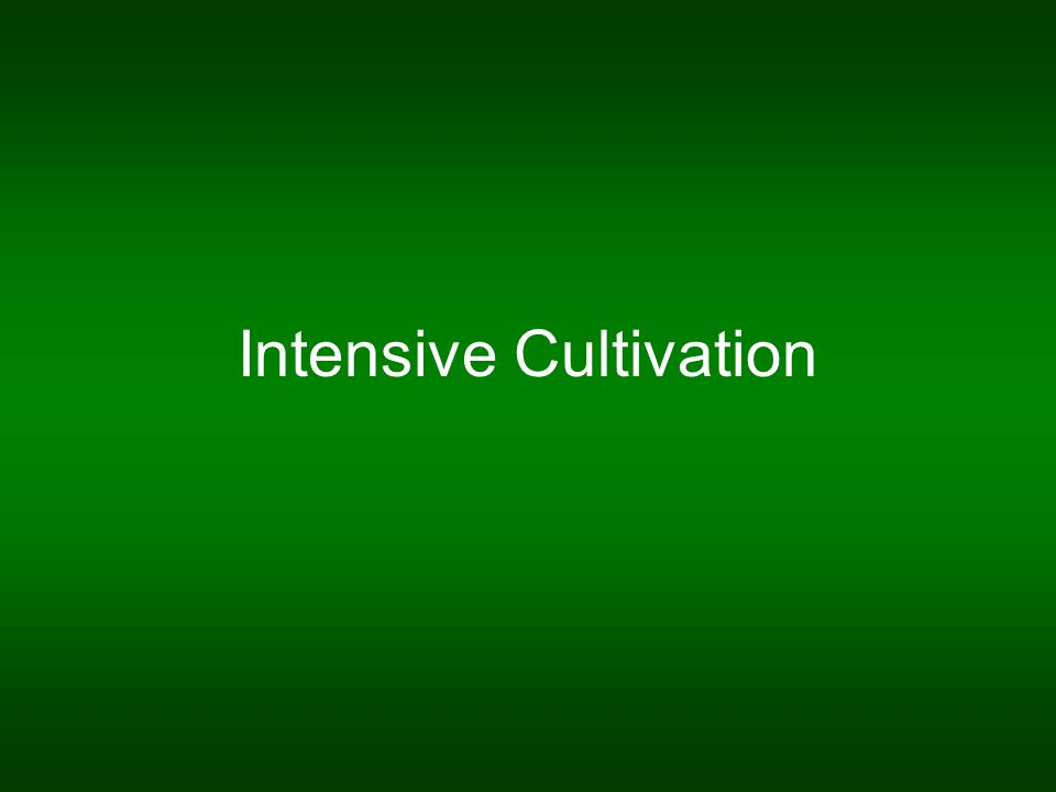 Intensive Cultivation