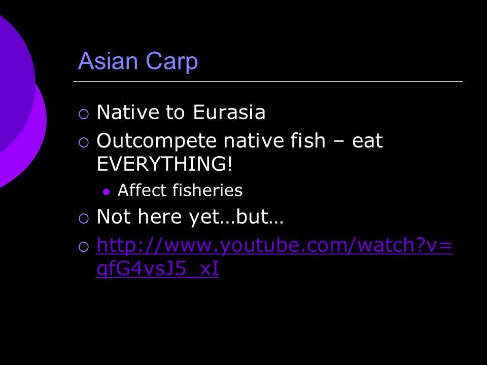 Asian Carp  Native to Eurasia  Outcompete native fish – eat EVERYTHING.