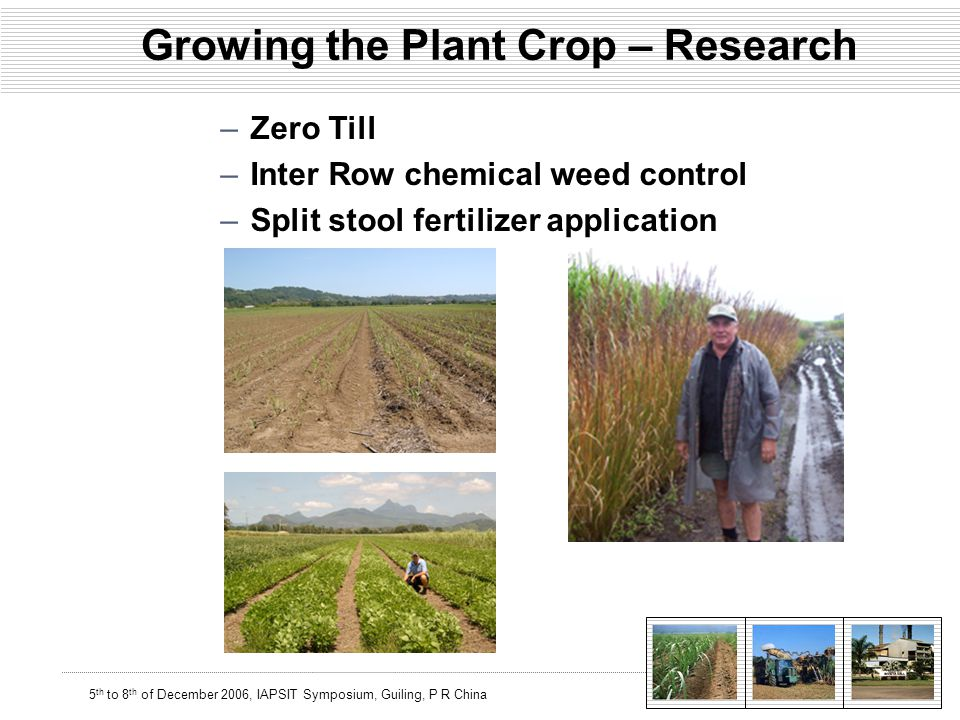 5 th to 8 th of December 2006, IAPSIT Symposium, Guiling, P R China Growing the Plant Crop – Research –Zero Till –Inter Row chemical weed control –Split stool fertilizer application