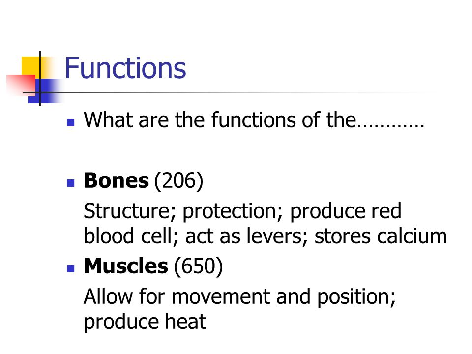 Functions What are the functions of the………… Bones (206) Structure; protection; produce red blood cell; act as levers; stores calcium Muscles (650) Allow for movement and position; produce heat
