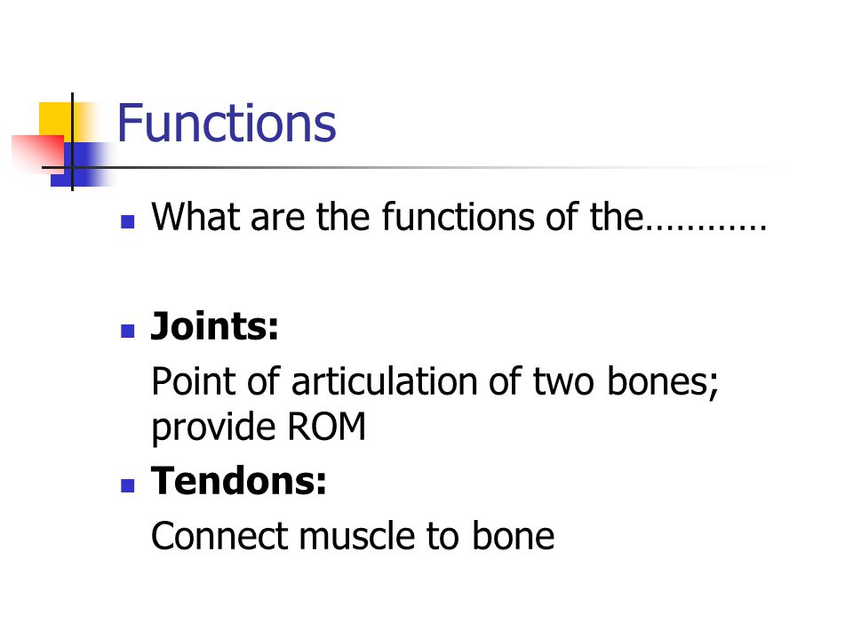 Functions What are the functions of the………… Joints: Point of articulation of two bones; provide ROM Tendons: Connect muscle to bone