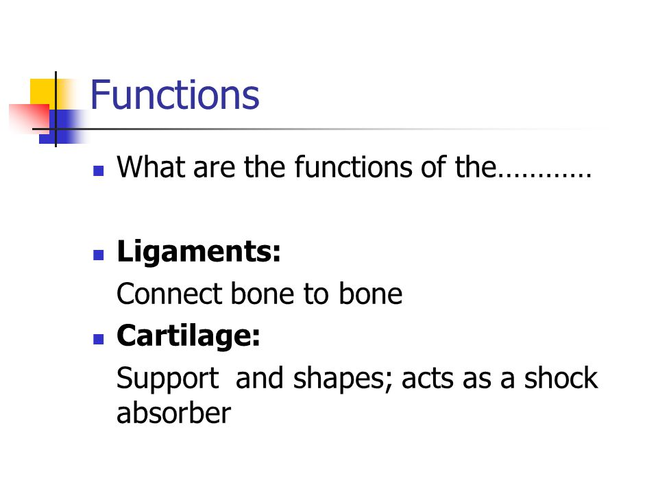 Functions What are the functions of the………… Ligaments: Connect bone to bone Cartilage: Support and shapes; acts as a shock absorber
