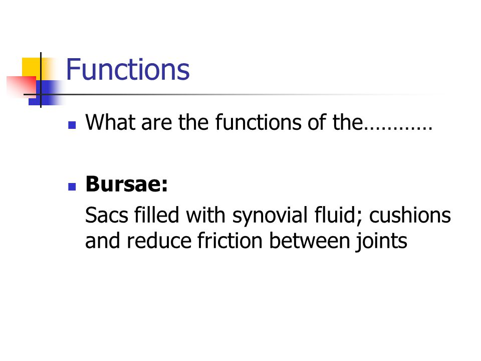 Functions What are the functions of the………… Bursae: Sacs filled with synovial fluid; cushions and reduce friction between joints