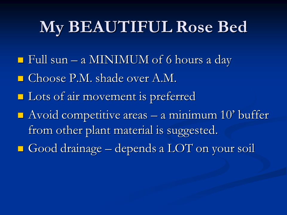 My BEAUTIFUL Rose Bed Full sun – a MINIMUM of 6 hours a day Full sun – a MINIMUM of 6 hours a day Choose P.M. shade over A.M. Choose P.M. shade over A