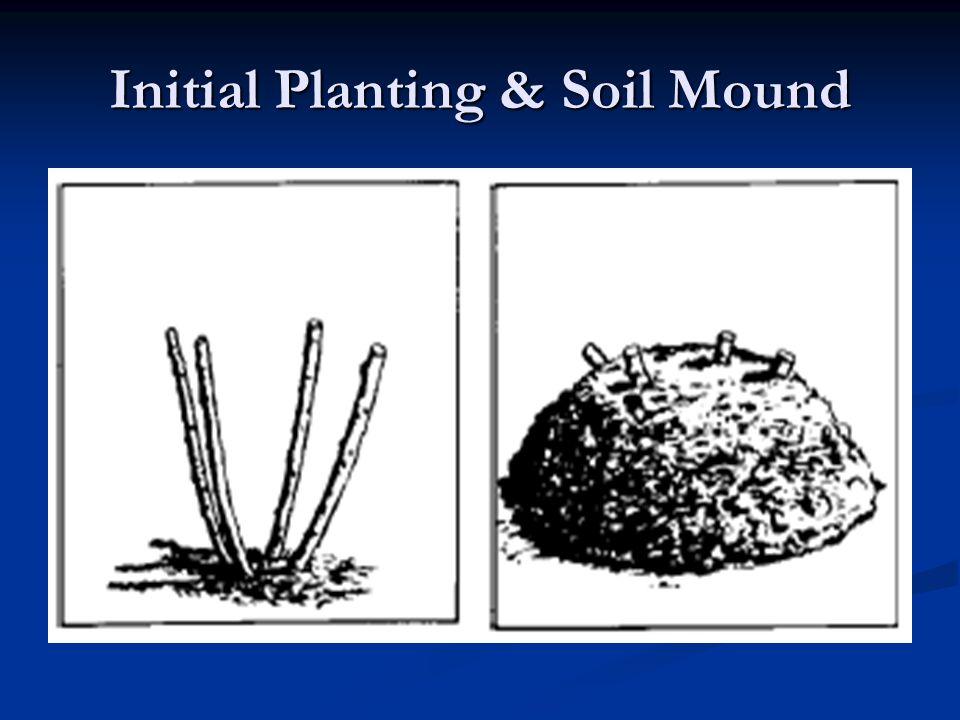 Initial Planting & Soil Mound