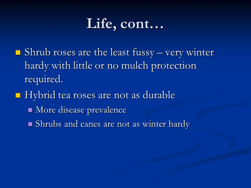 Life, cont… Shrub roses are the least fussy – very winter hardy with little or no mulch protection required. Shrub roses are the least fussy – very wi