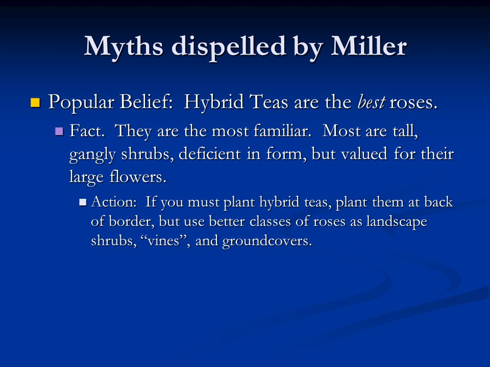 Myths dispelled by Miller Popular Belief: Hybrid Teas are the best roses.