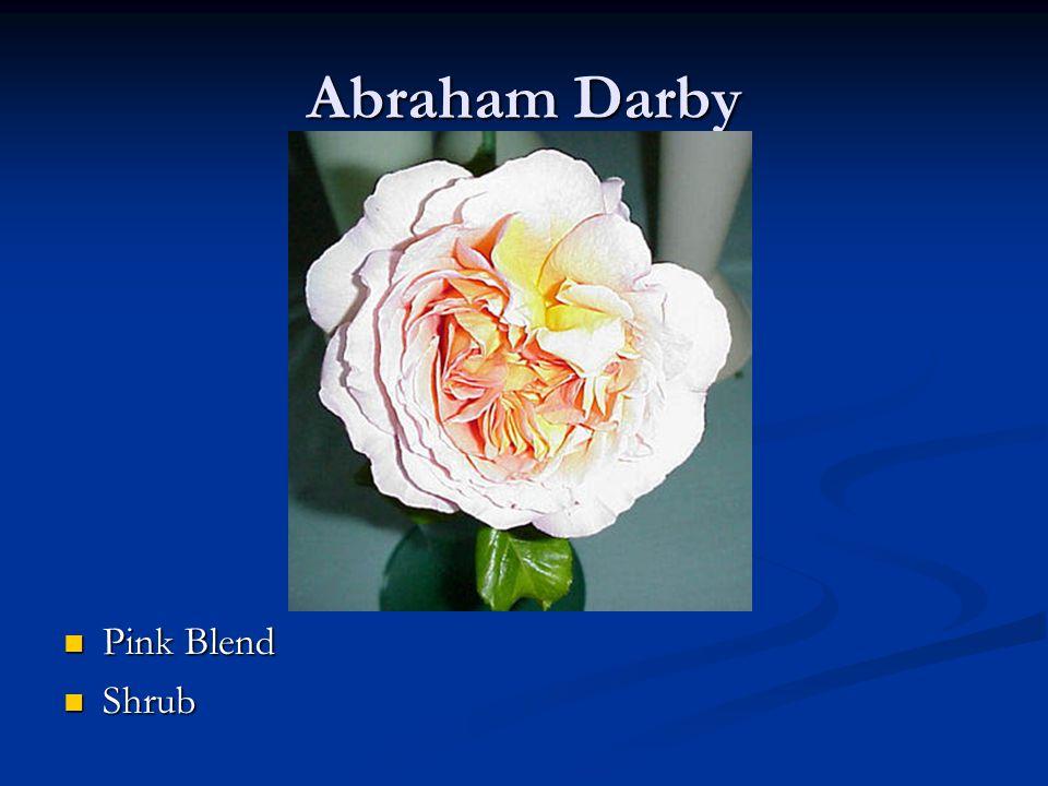 Abraham Darby Pink Blend Shrub