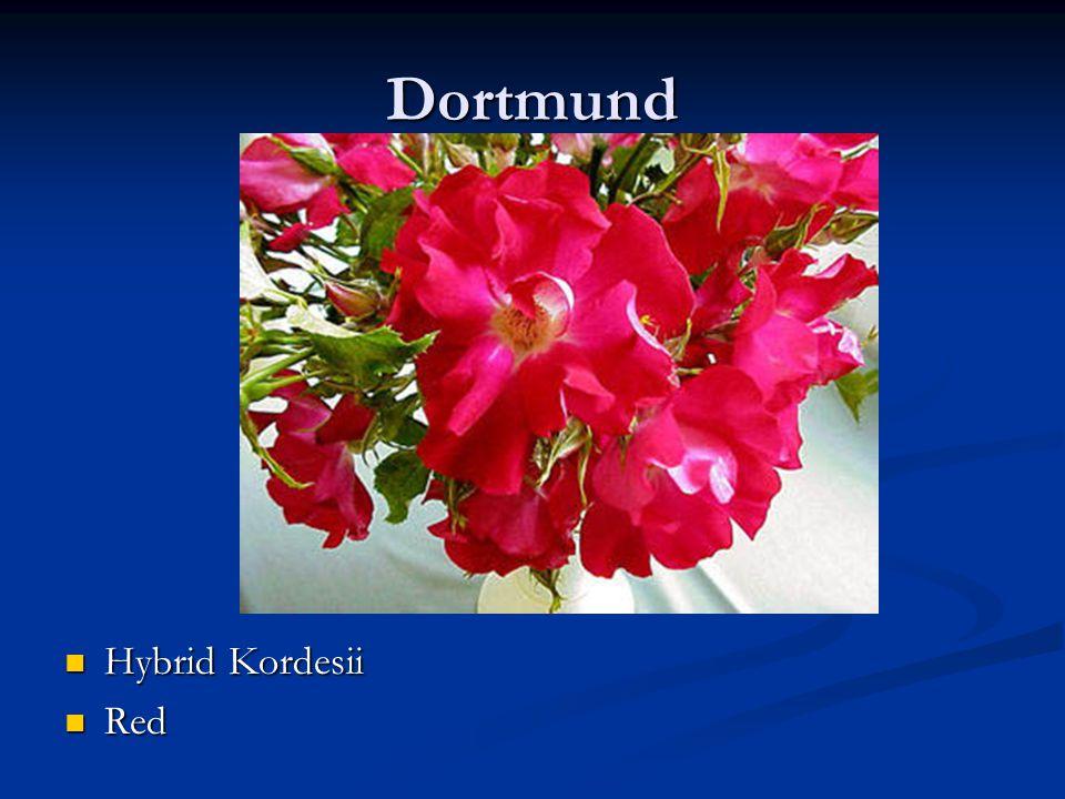 Dortmund Hybrid Kordesii Red