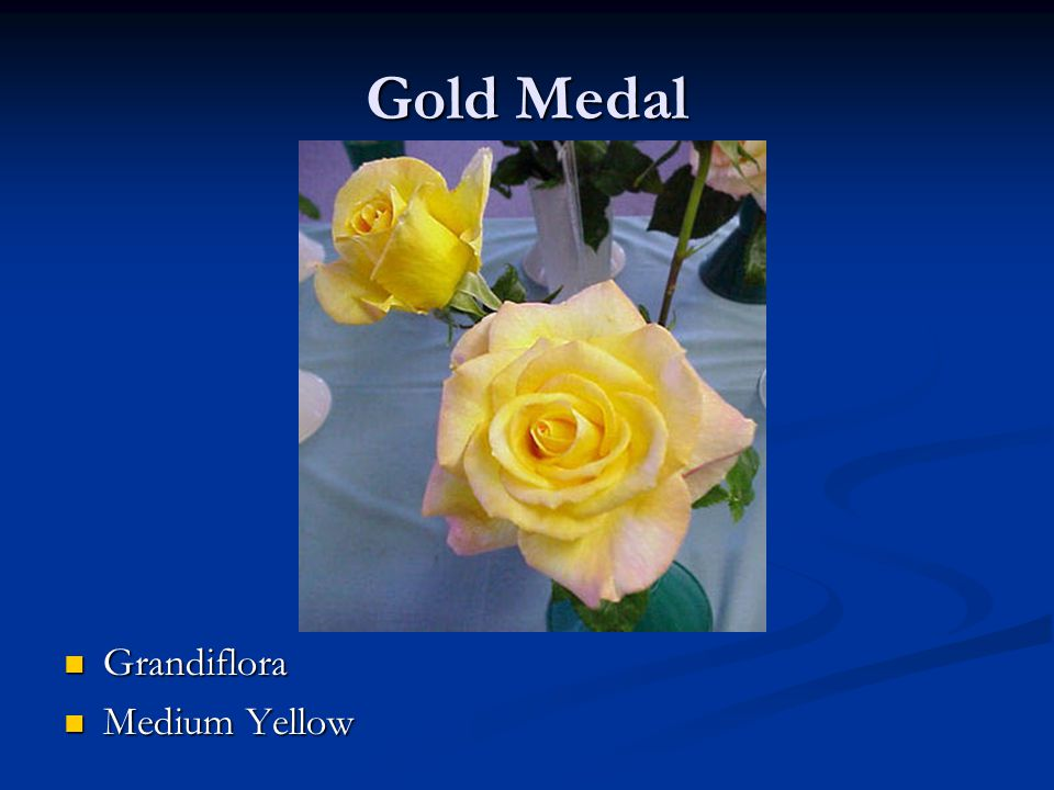 Gold Medal Grandiflora Medium Yellow