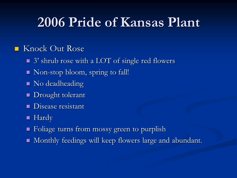 2006 Pride of Kansas Plant Knock Out Rose Knock Out Rose 3' shrub rose with a LOT of single red flowers 3' shrub rose with a LOT of single red flowers Non-stop bloom, spring to fall.