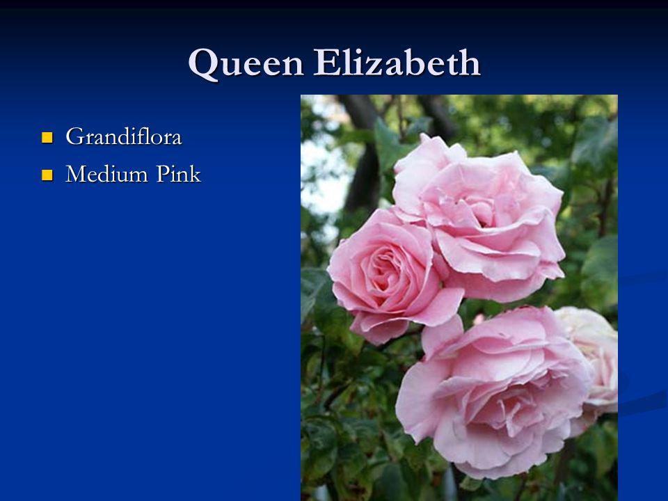 Queen Elizabeth Grandiflora Grandiflora Medium Pink Medium Pink