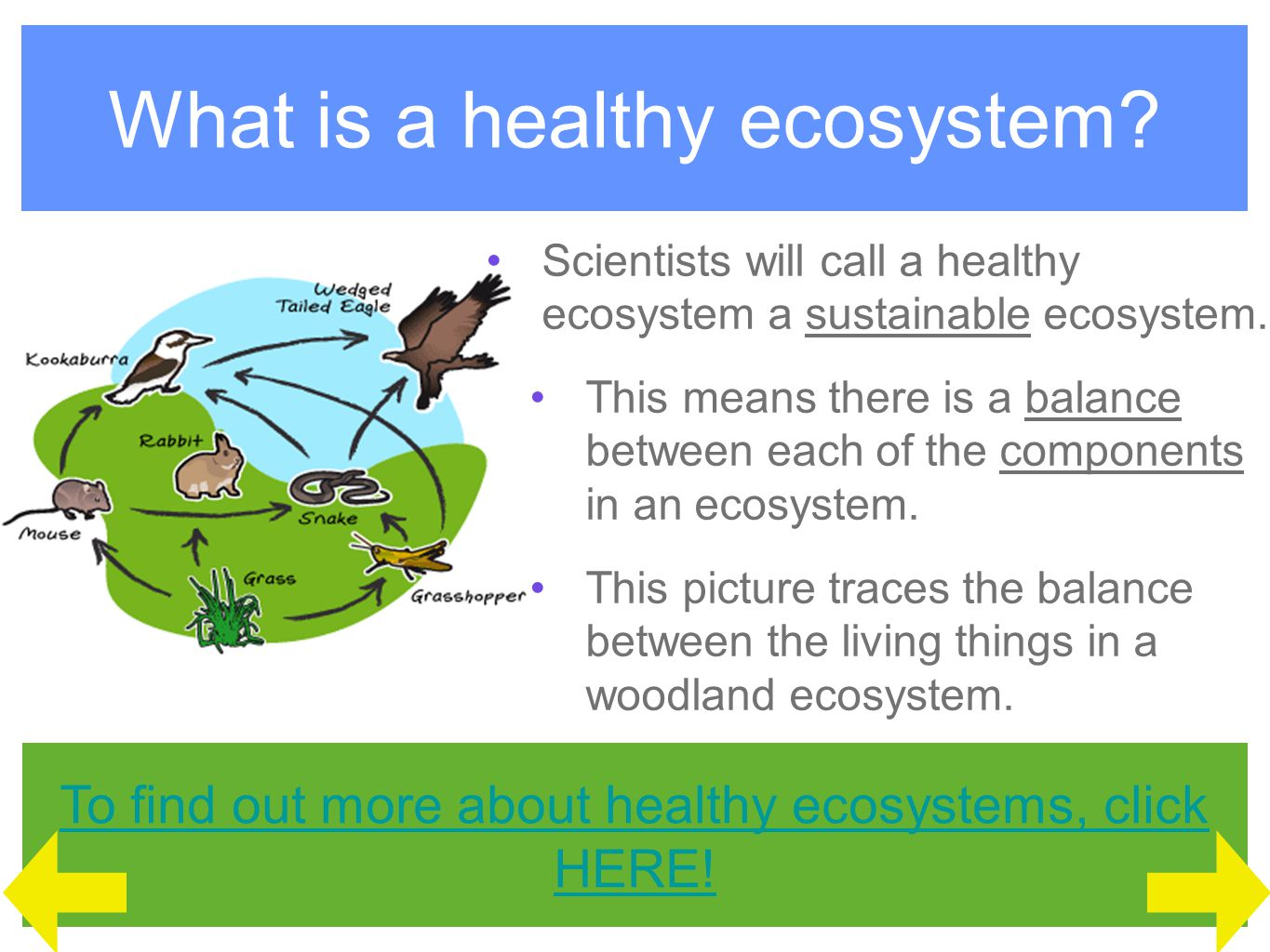 Ecosystem Facts Each component of an ecosystem is a source of food for another.