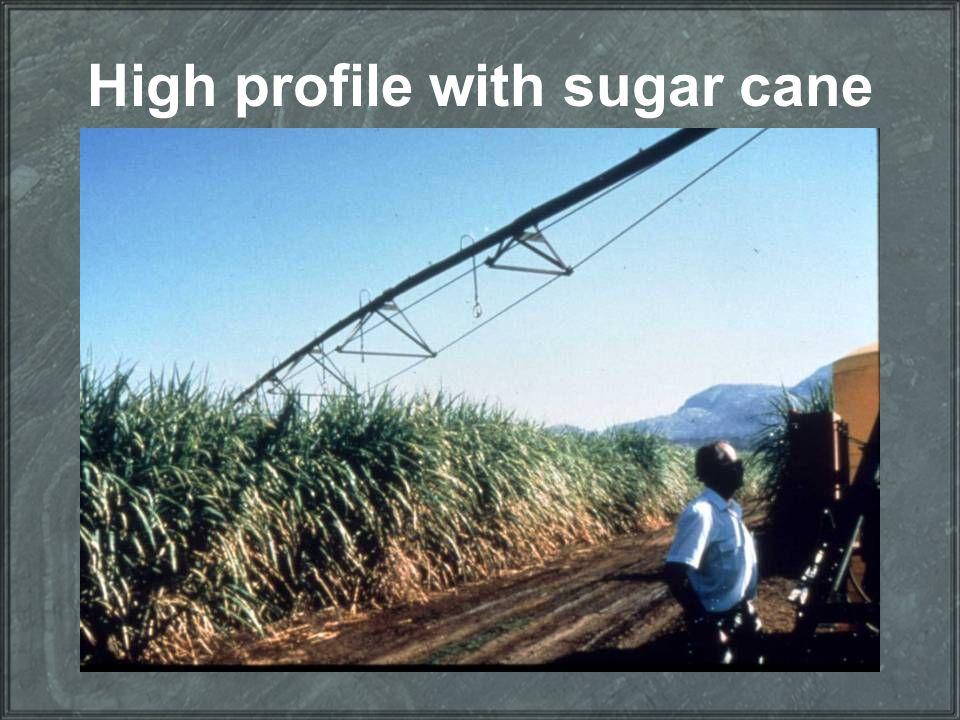 High profile with sugar cane