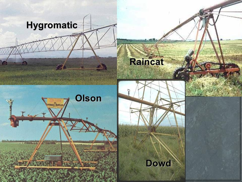 Hygromatic Olson Raincat Dowd