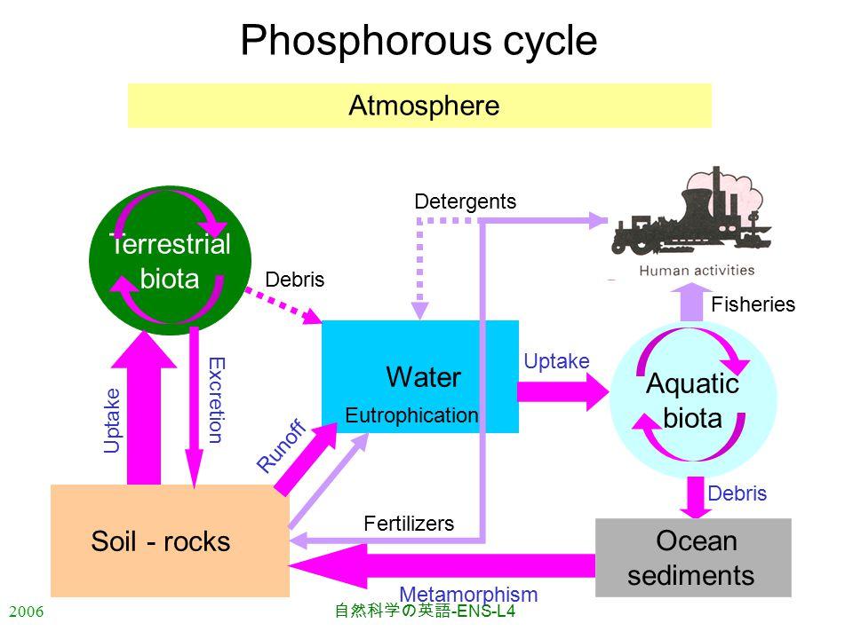2006 自然科学の英語 -ENS-L4 Water Phosphorous cycle Atmosphere Soil - rocks Aquatic biota Terrestrial biota Metamorphism Excretion Uptake Runoff Uptake Debris Fisheries Ocean sediments Fertilizers Detergents Eutrophication
