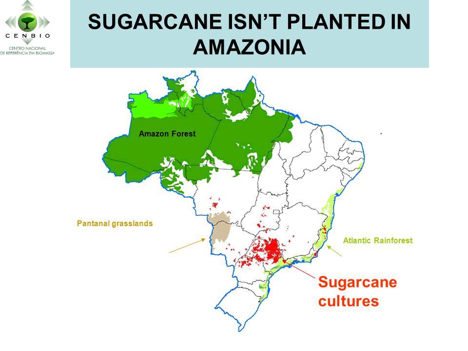 Amazon Forest Sugarcane cultures Pantanal grasslands Atlantic Rainforest SUGARCANE ISN'T PLANTED IN AMAZONIA