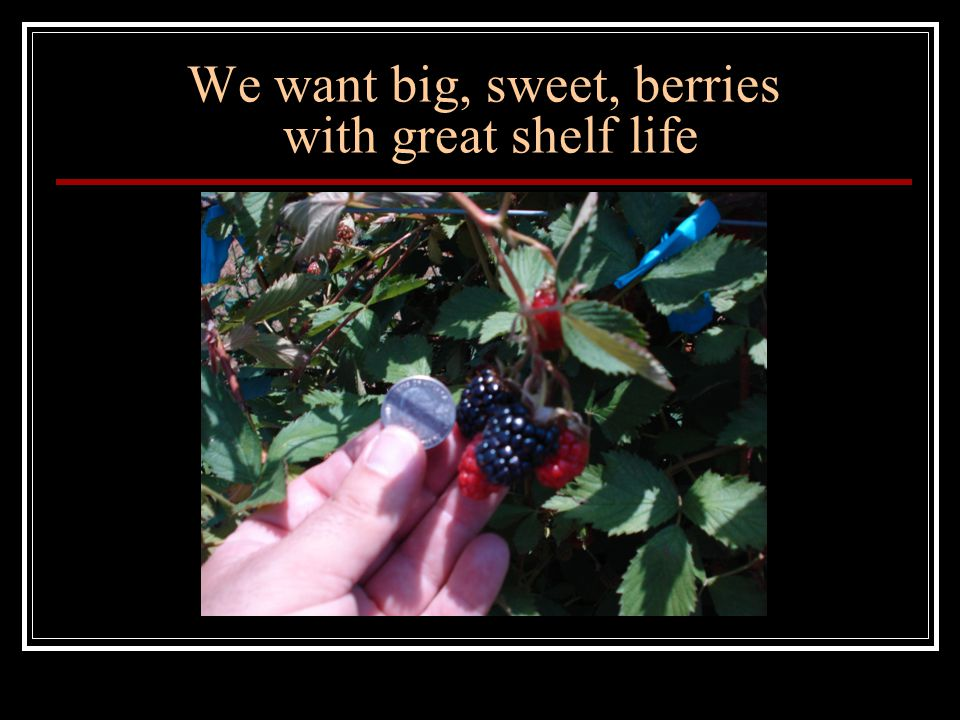 We want big, sweet, berries with great shelf life