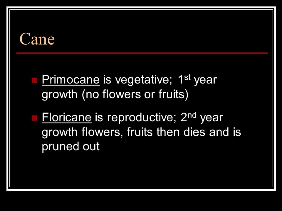 Cane Primocane is vegetative; 1 st year growth (no flowers or fruits) Floricane is reproductive; 2 nd year growth flowers, fruits then dies and is pruned out