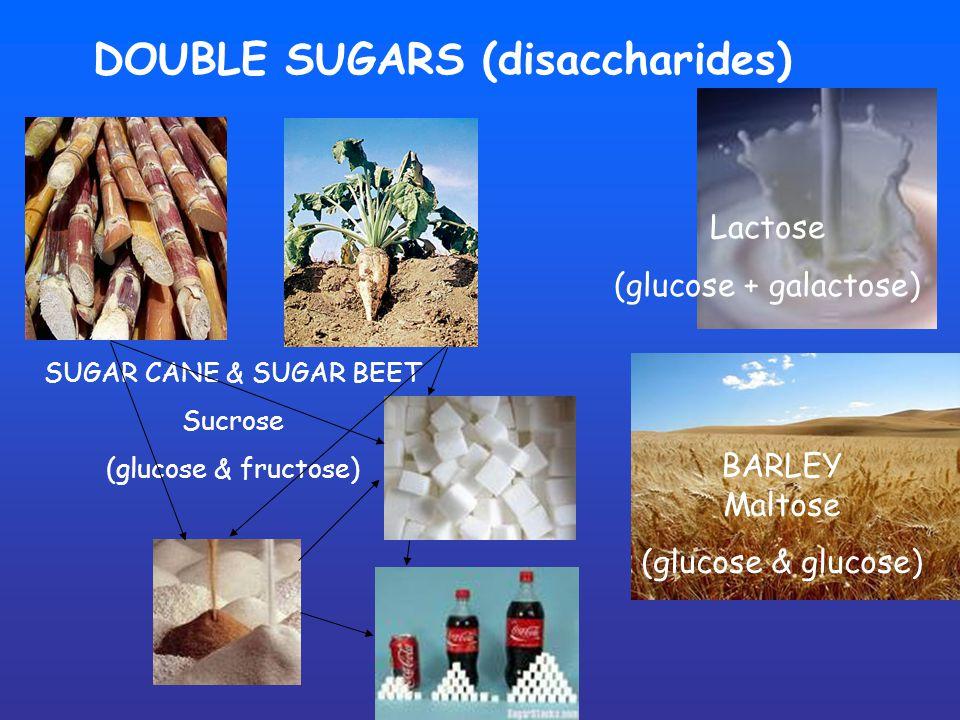 DOUBLE SUGARS (disaccharides) Lactose (glucose + galactose) BARLEY Maltose (glucose & glucose) SUGAR CANE & SUGAR BEET Sucrose (glucose & fructose)