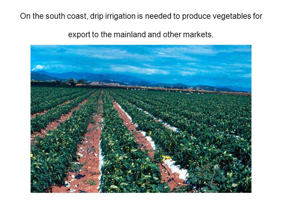 On the south coast, drip irrigation is needed to produce vegetables for export to the mainland and other markets.