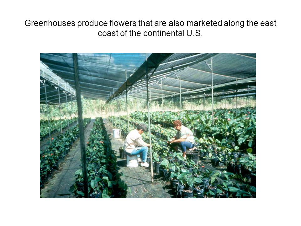 Greenhouses produce flowers that are also marketed along the east coast of the continental U.S.